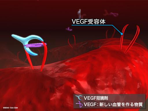 VEGF受容体と阻害薬2