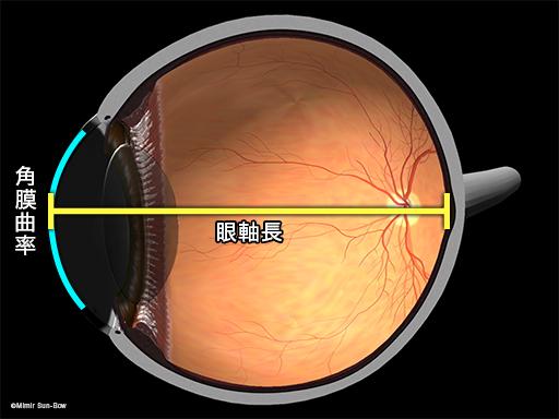 角膜曲率と眼軸長