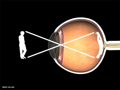 視神経の働き1