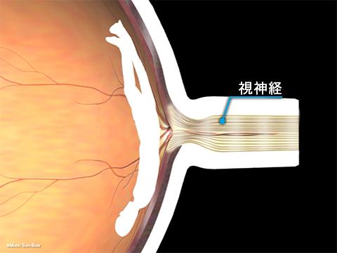 視神経の働き2
