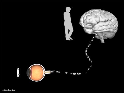 視神経の働き3