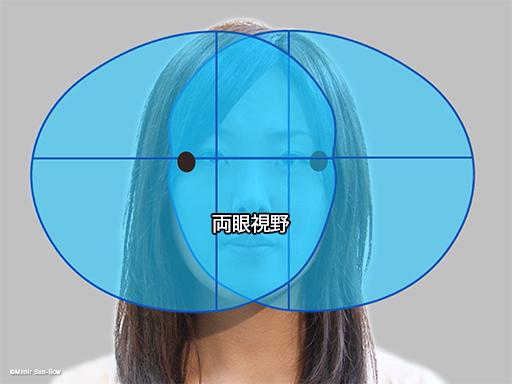 視野と盲点4